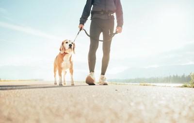 朝の散歩をする犬と飼い主