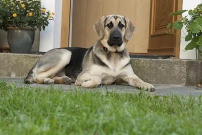 玄関の前に座っている犬