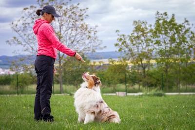 女性と向き合ってトレーニングをする犬