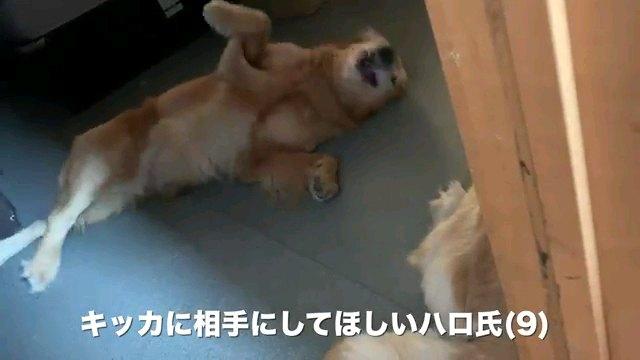 キッカに~字幕