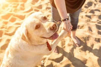 カメラ目線でお手をする犬