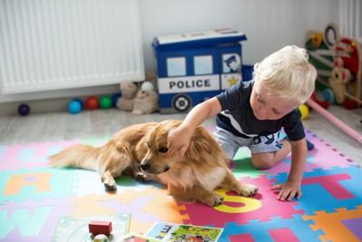 子どもに構われている犬