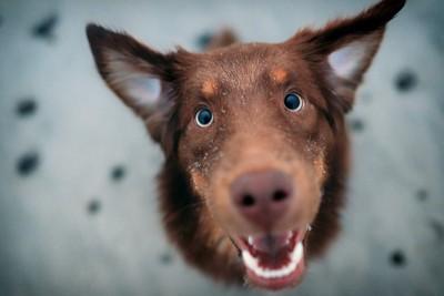 こちらを見て嬉しい様子の犬