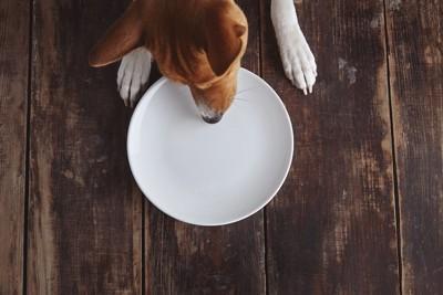 カラのお皿を見つめる犬