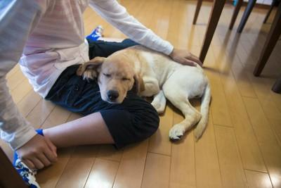 床に座る飼い主の足にあごを乗せる犬