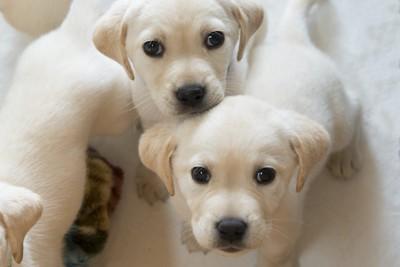 こちらを見上げる2頭の子犬