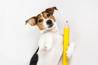 鉛筆を持った犬