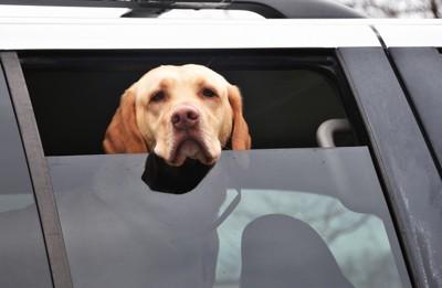 窓にあごをかけている犬