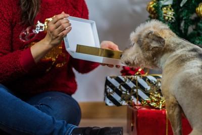 プレゼントを覗く犬