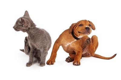 身体を掻いている猫と犬