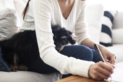 何かを書いている飼い主さんの足の上で寝ている犬