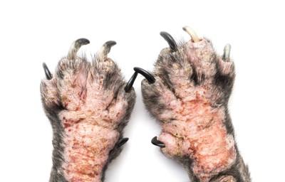 手荒れをしている犬の手