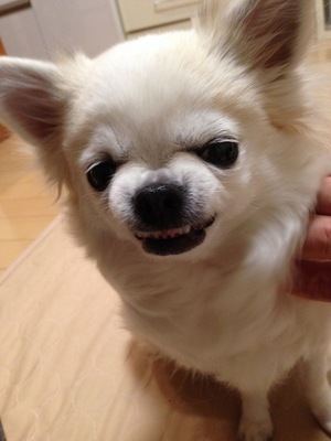 愛犬の変顔写真8枚目