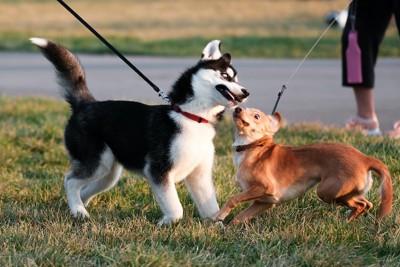 散歩中に近づいて遊ぼうとする犬と怖がる犬