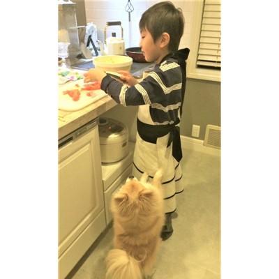 お料理する男の子とクッキー
