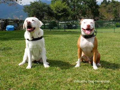 笑っている2匹の犬