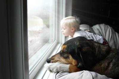 小さな男の子と一緒に外を見る犬