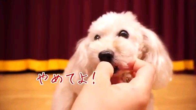 やめてよ!~字幕