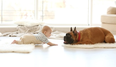 赤ちゃんと向き合う犬