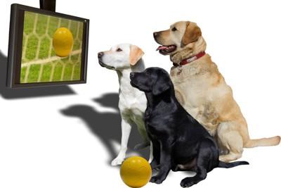 テレビの中のボールを見る3匹の犬