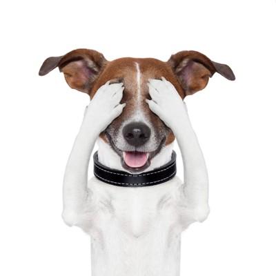 目を隠す犬