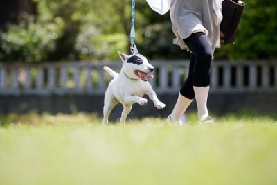 リードを付けて走る犬