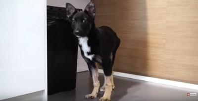 手術後に立つ犬