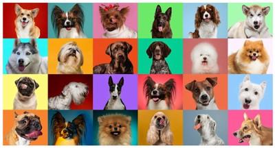 カラフルないろいろな犬種集合写真