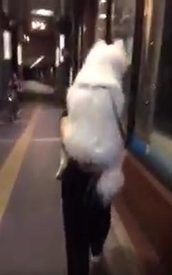 piggybackride
