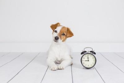 時計と首をかしげる犬