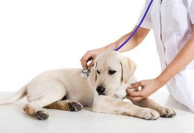 看護師と犬