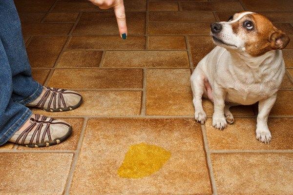 おしっこをして叱られる犬