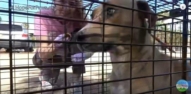 緊張する母犬