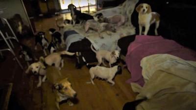 部屋中にあふれる犬