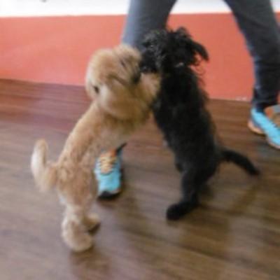 他の犬と遊ぶエマさん