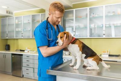 獣医さんとビーグル