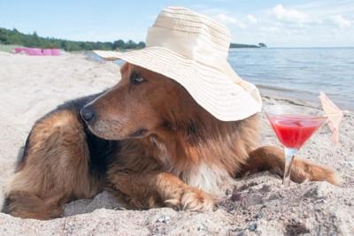 海にいる犬