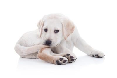 尻尾を噛む犬