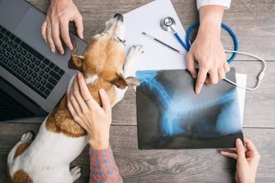 獣医師と飼い主の手と犬
