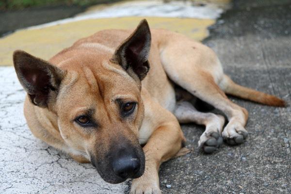 路上に横たわる犬