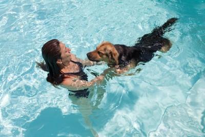 飼い主と泳ぐ犬