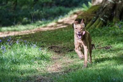 山道を走る犬