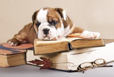 犬と古い本