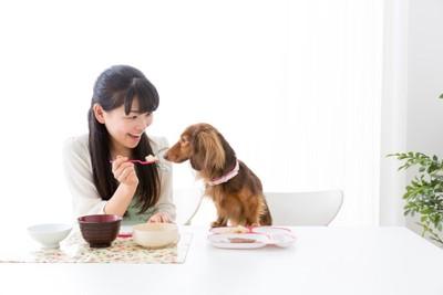 飼い主と一緒にご飯を食べている犬