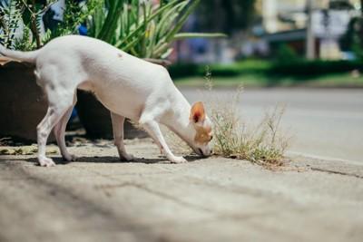 地面を嗅いでいる犬