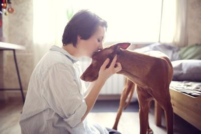 犬の額にキスをする女性