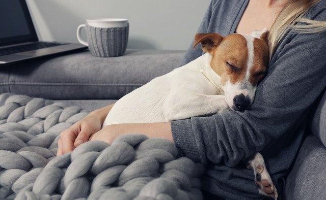 飼い主の腕の中で寝ている犬の写真