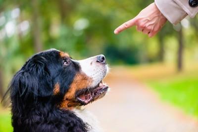 指示を出す飼い主の手を見つめる犬