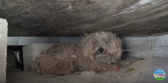 床下に隠れる犬