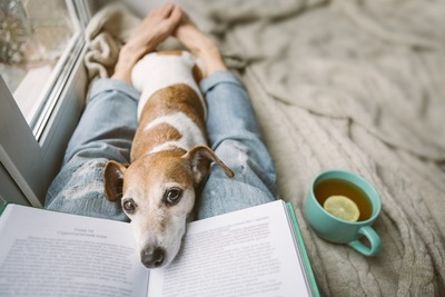 本を読む人の脚の間に挟まる犬
